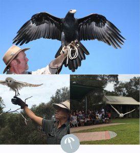 Olivers Taranga Best Things to do in McLaren Vale KI Autumn 2018 3 raptor domain in flight birds of prey | 2021