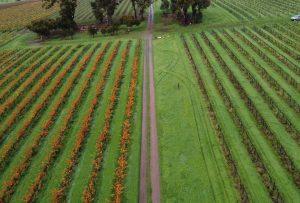 Pruning grid   2021